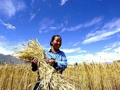 Çin Tarım