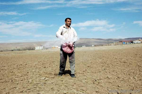 Tohum atan çiftçi