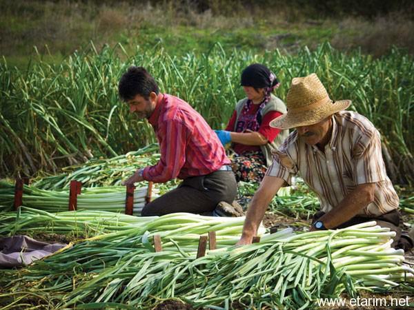 tarım ve insan