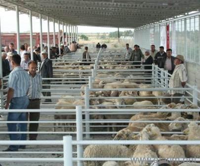 hayvan pazarı