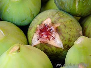 incir meyvesi