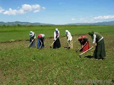 Tarım İşçileri - İmeci