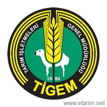 Tigem Logo