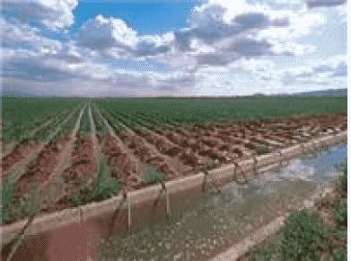 Tekirdağ'da Damlama Su Projesi