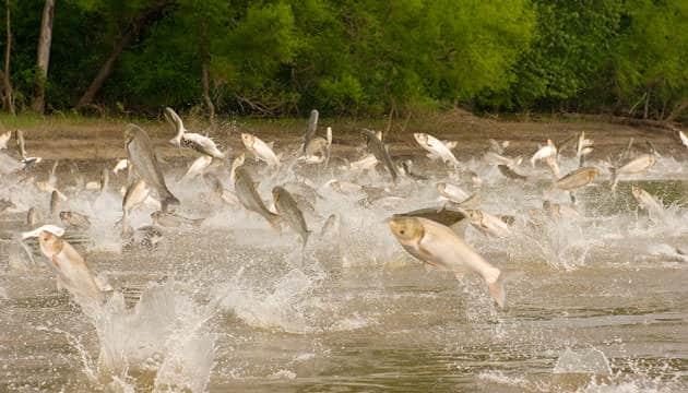 göl balıkları