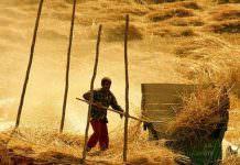 Çiftçi hasat