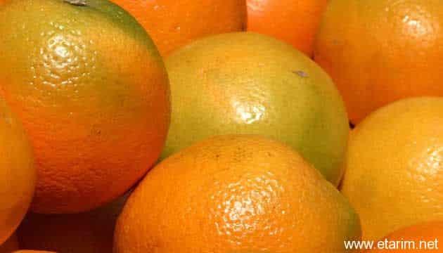 Fatih Portakalı