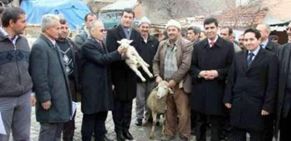 köylüye koyun ve fidan dağıtıldı