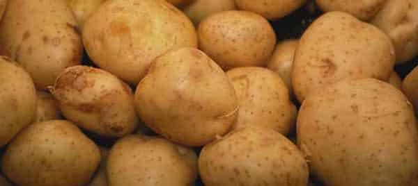 patates - patato