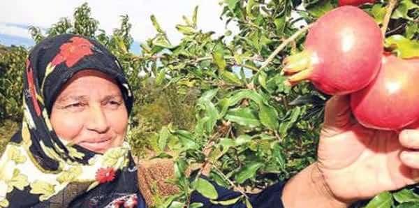 organik tarım