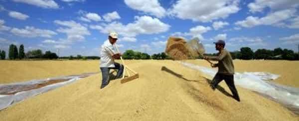 tarım ihracat çiftçi