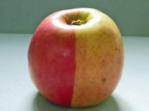 renkli elma
