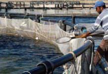 havuz balıkçılığı- kültür balıkçılığı