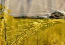 Reuters: İran buğday depoluyor, ödeme Türkiye üzerinden