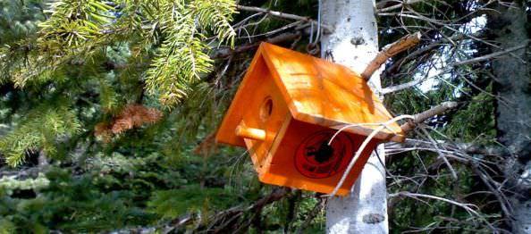 ağaçta kuş yuvası