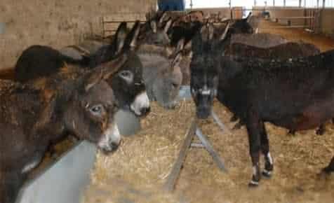 Türkiye'nin ilk eşek sütü üreten çiftliği