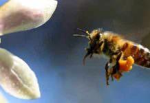 Arıcılar, Bal Üretimindeki Düşüşten Yakındı
