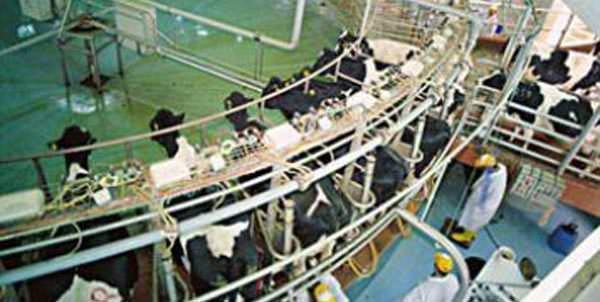 Mayıs ayında süt üretimi 782 bin 342 tona çıktı