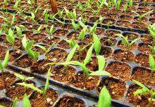 Genetik Değiştirme İşlemleri ve Biyogüvenlik