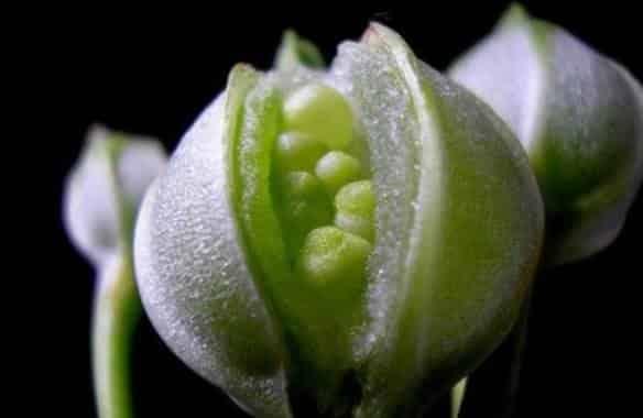 Bitki Islahı ve Uygulanan Metotlar
