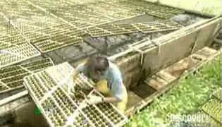 Topraksız tarım tekniğiyle marul üretimi