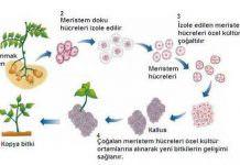 Biyoteknoloji ve Bitki Biyoteknolojisinin Tanımları