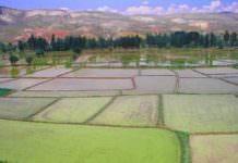 Pirinç'te KDV indirme talebi