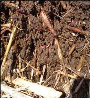 toprak yapısı,toprak maddesi