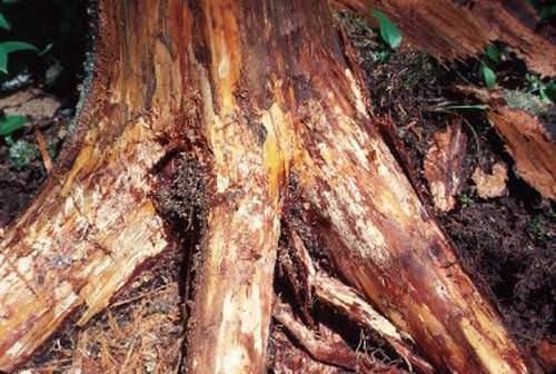 fungal hastalık