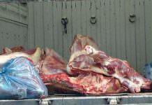 Tırla Kaçak Et Sevkiyatı