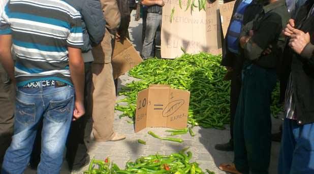 Kaş'ta Çavdırlı çiftçi biberin 20 kuruşluk fiyatına tepki gösterdi
