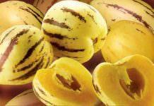 pepino,partenokarpik,meyve,yetiştiricilik,tarım