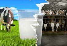 'Ulusal Süt Kayıt Sistemi' yanıltıldı