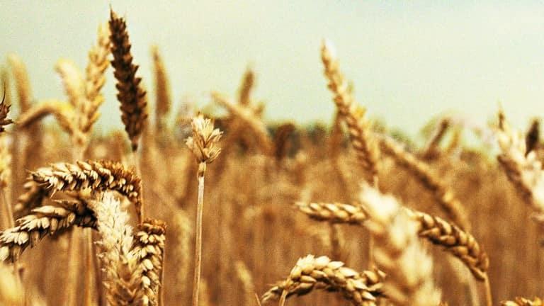 10 yıllık tarım politikası fiyasko mu?