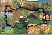 tarla bitkileri,endüstri bitkileri,
