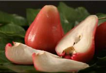 jambu meyvesi