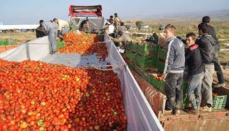 Devlet meyvecilik projesi yaptı