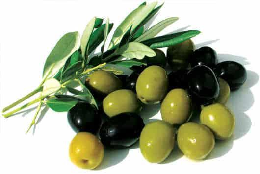 Türkiye Zeytinciliği tanıtılacak
