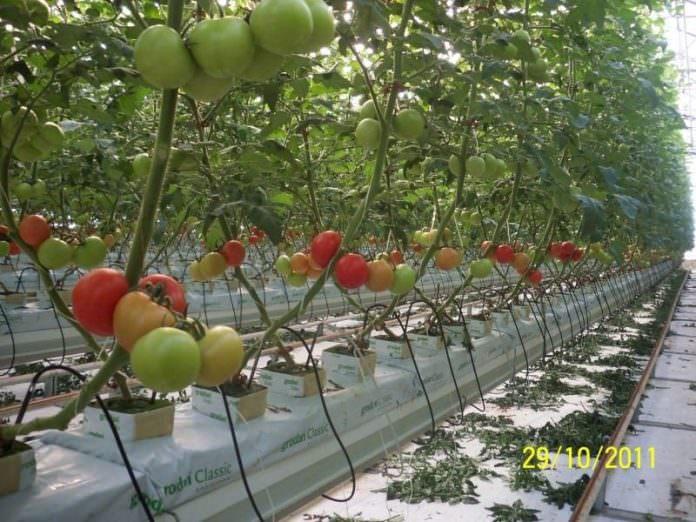 topraksız tarım