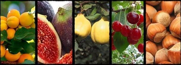 tarımsal ihracat