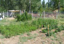 bahçe bitkileri