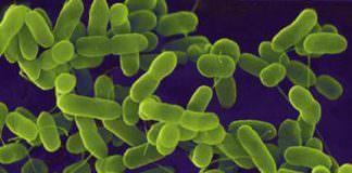 bakteriyal hastalıklar