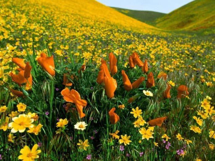bitkilerin dünyası