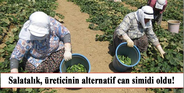 tursuluk_salatalik_ureticinin_alternatif_can_simidi_oldu_
