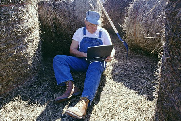 Farmer Using Laptop Amidst Haystacks