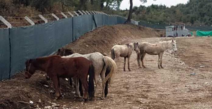 At keserlerken jandarma bastı