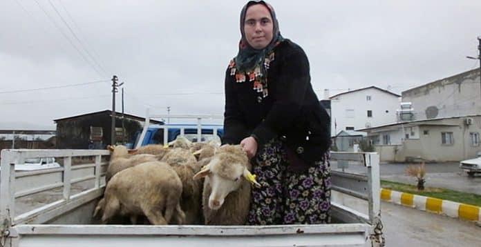 Devletin genç çiftçilere verdiği destek ile iş kadını oldu