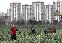 4 milyon hektar tarım alanı sadece 27 yılda yok oldu