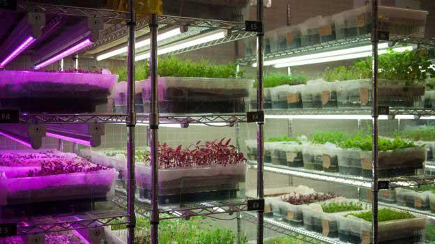 Tarım alanına sahip olmayan ülkeler nasıl tarım yapıyor?
