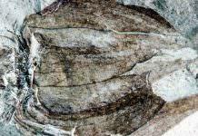 50 milyon yaşında meyve bulundu